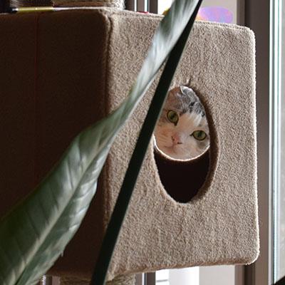 パピ(本家の猫)はどこでしょう