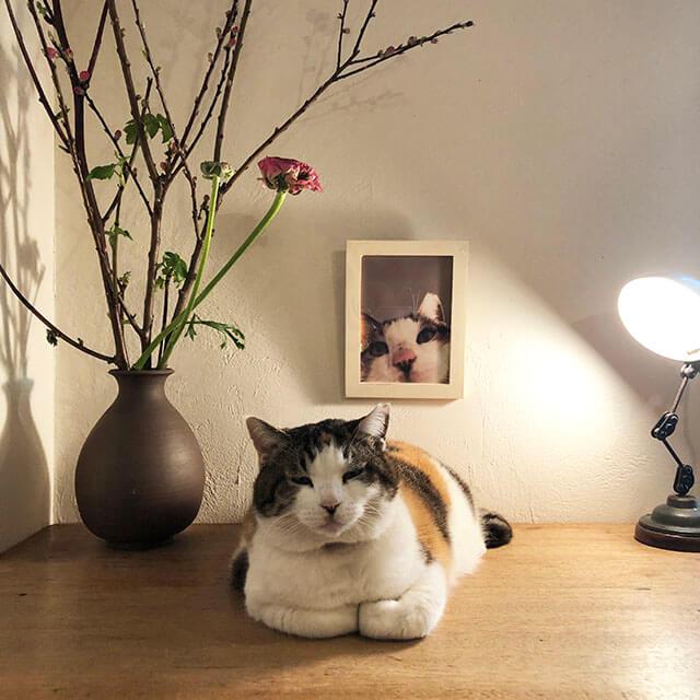 猫の日に「オトナまんまごと展」初日